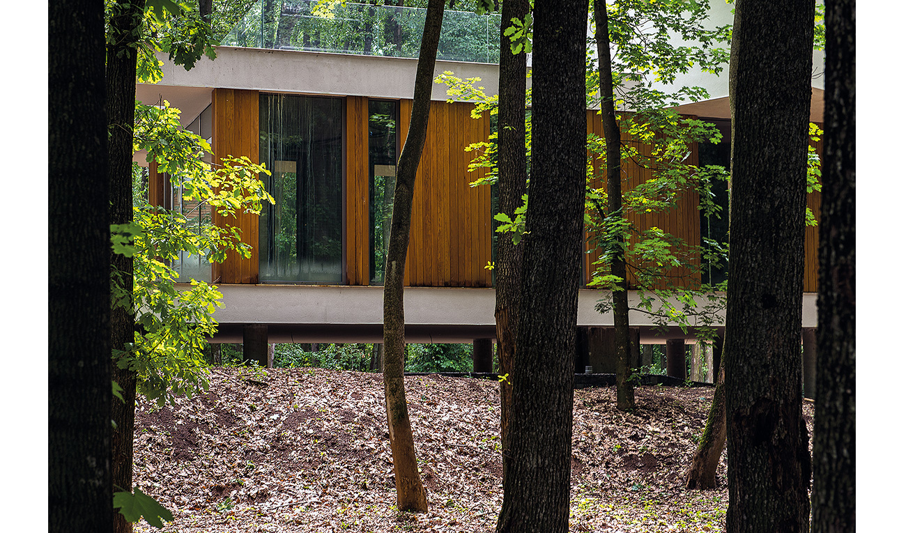 foresthouse9